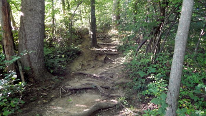 ...and other sections can be strenuous, with tree roots to step over and steep hills to conquer.