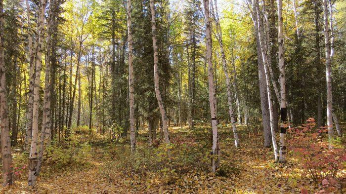 FOREST Flickr - Luke Jones