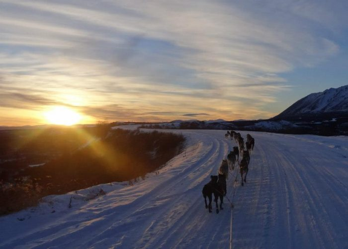 "11. Dog sled tour with the ""Winning-est Musher in the World."""
