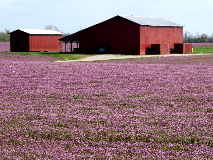 2. Fields of flowers
