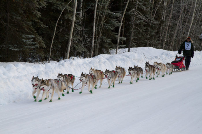 3. When you see a sled dog team on the side of the road, you'll undoubtedly fan-girl out. And maybe go in the ditch.