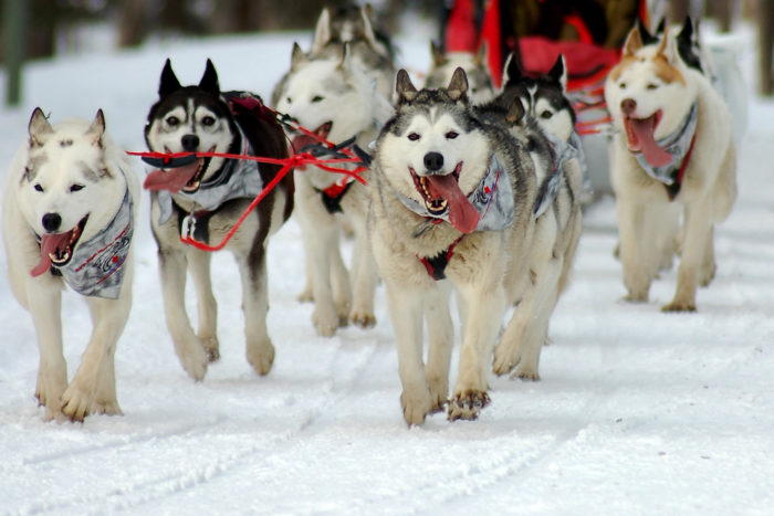 7. Crazy dog lovers and the mushing community.