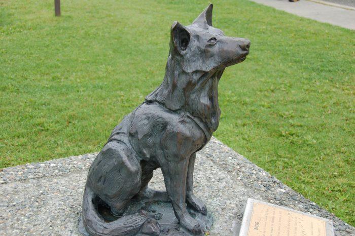 6. Balto the Wonder Dog – Palmer