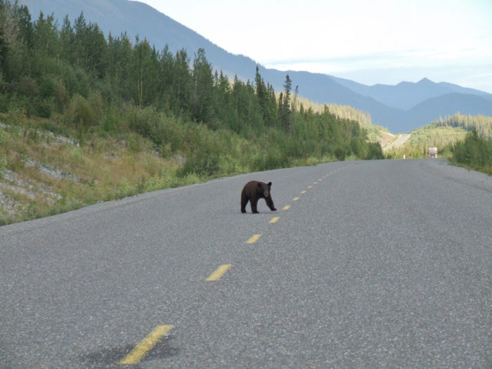 15. Yield to the wildlife. This is their land, we just live here.