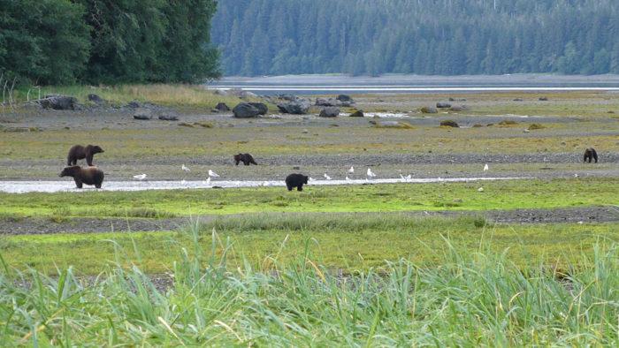 Flickr - USDA Forest Service Alaska Region