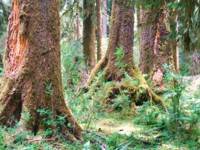 8. Hoh Rainforest