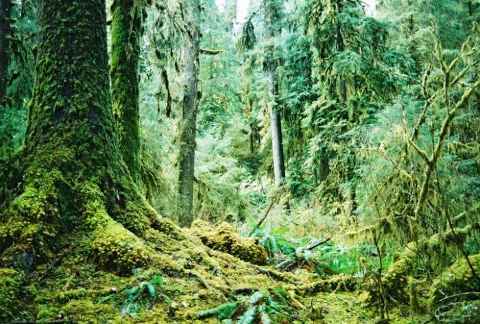 Hoh Rainforest, Wa.-2397828880