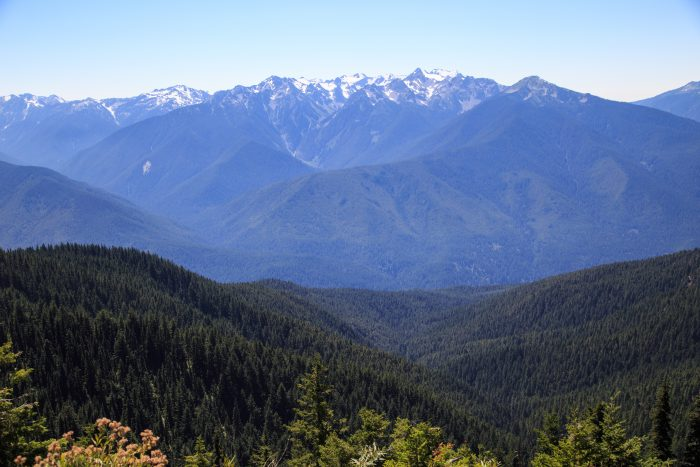 12. And the incredible view of Hurricane Ridge at Olympic National Park.