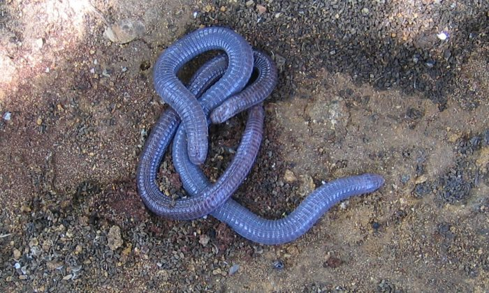13. The Earthworms—Hawkinsville, Georgia