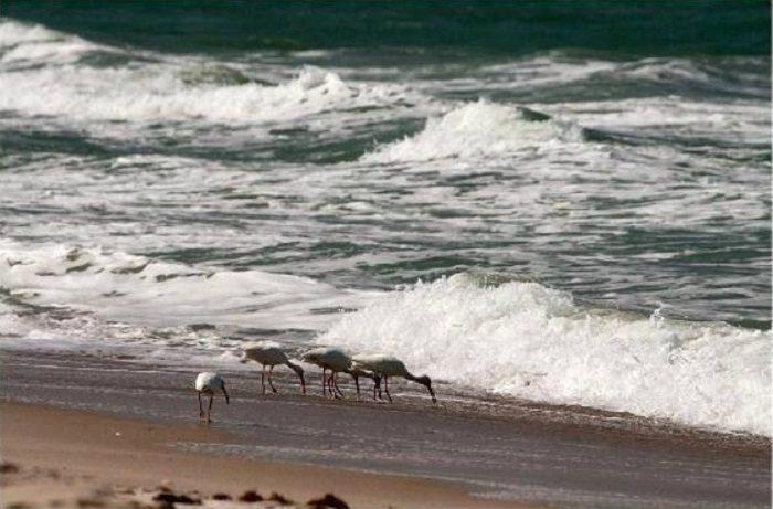 Jacksonville Beach 7