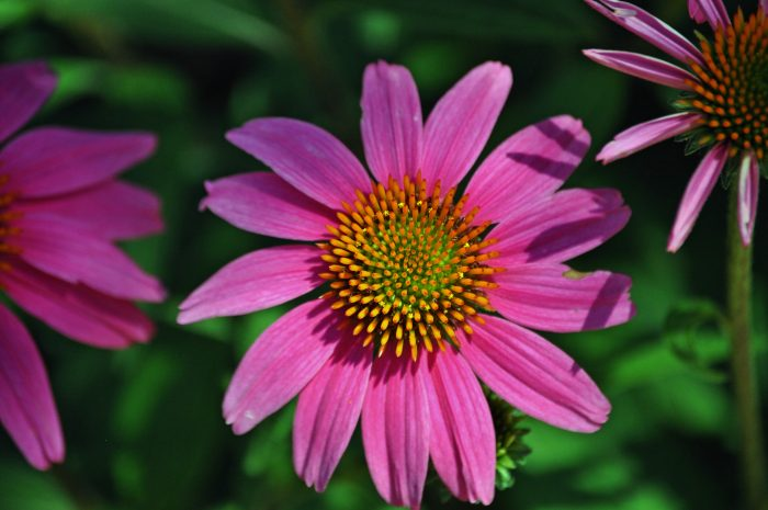 9. The Lady Bird Johnson Wildflower Center