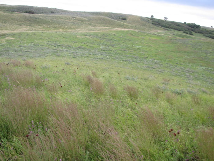 10. Gently waving grass in Sullys Hill Game Preserve
