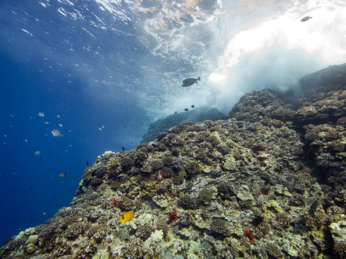 Molokini is only one of three volcanic calderas in the world, and is Hawaii's only island marine sanctuary.