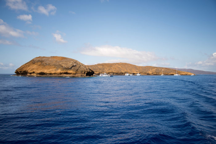 In 1977, Molokini was declared a Marine Life Conservation District, and it is imperative to protect this magnificent slice of reef for decades to come.