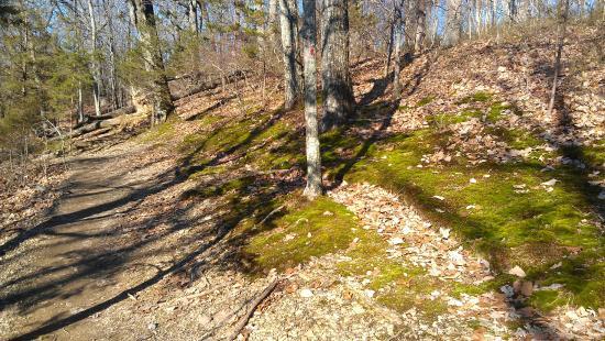 Mossy Ridge Trail - TripAdvisor