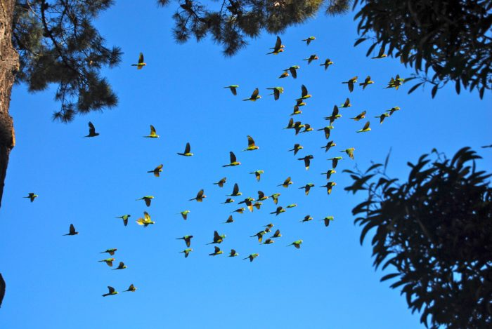 You may even spot the famous wild parrots of Telegraph Hill who like to hang out over here as well.