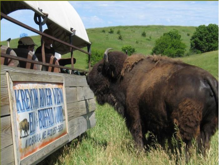 12. Feed elk and buffalo from a covered wagon at Kreycik Elk & Buffalo Ranch.