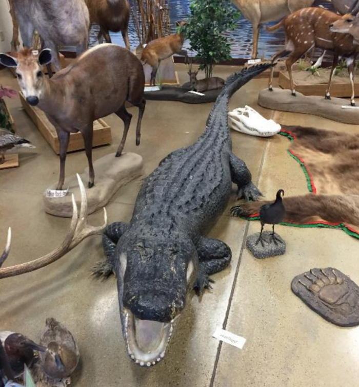 5. Call of the Wild Museum - Rapid City