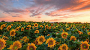 These 8 Incredible Instagram Photos Capture The Pure Beauty Of Northern California