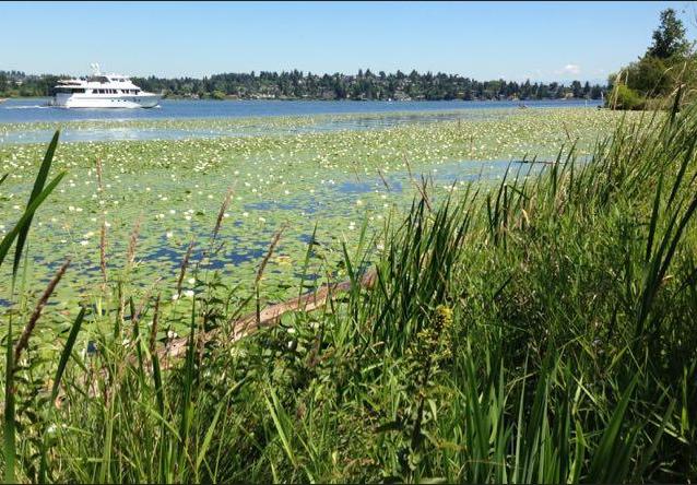 3. Arboretum Waterfront Trail, Lake Washington, Seattle