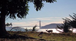If You Live In San Francisco, You Must Visit This Amazing State Park