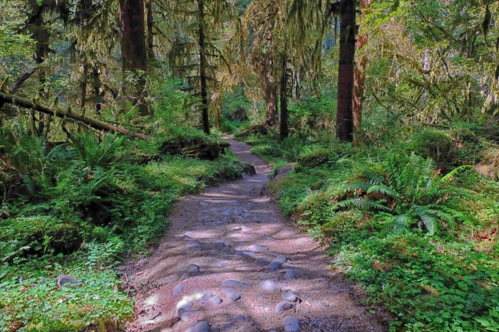 Upper Hoh River Trail. Olympic National Park.-9556480846