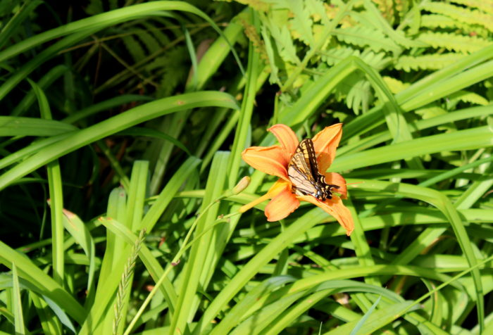 Another thing waiting for you at the trailhead? Butterflies!