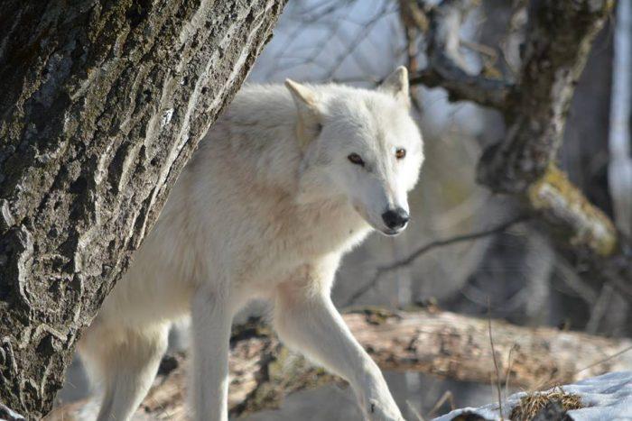 8. Shalom Wildlife Sanctuary (West Bend)