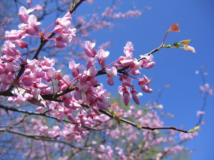 5. Whether in the spring or the fall, the trees here are gorgeous.