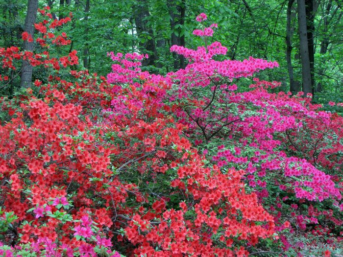 What's wonderful about the Arboretum is that the nature differs with the season.