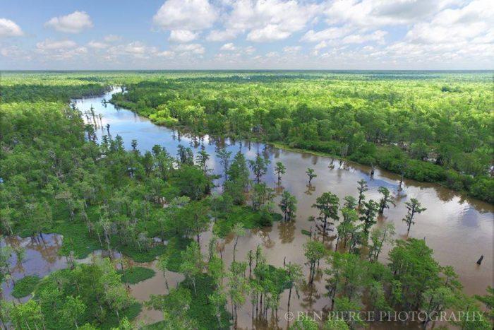 4. Atchafalaya Swamp
