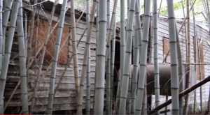 What Was Discovered Hiding Deep Inside A Bamboo Forest In Virginia Will Leave You In Awe