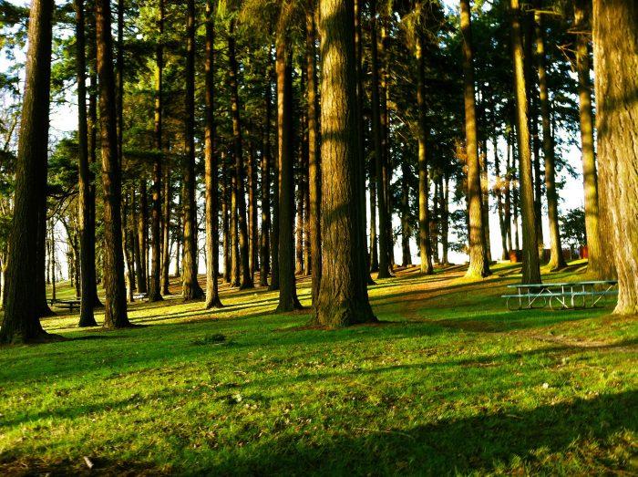 8. Sellwood Park