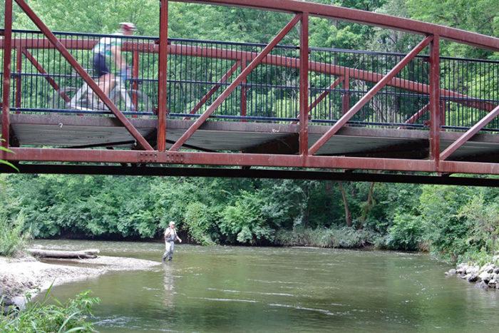 bridge n- fish