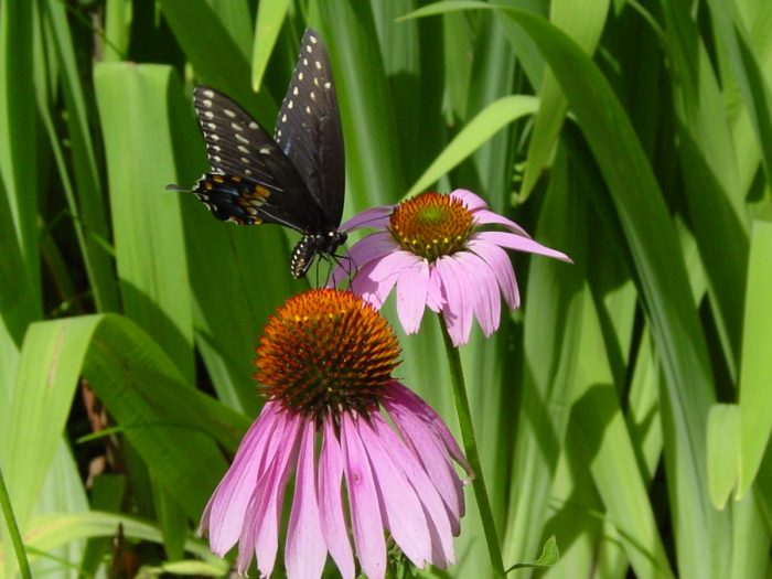 There are some truly gorgeous butterflies to be found throughout the grounds.