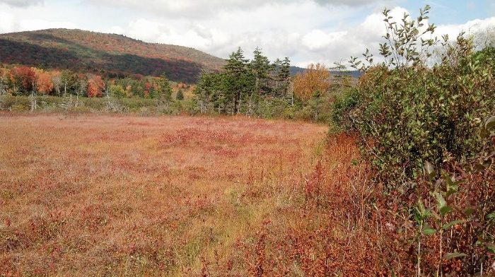 You'll also see the Cranberry Glades.