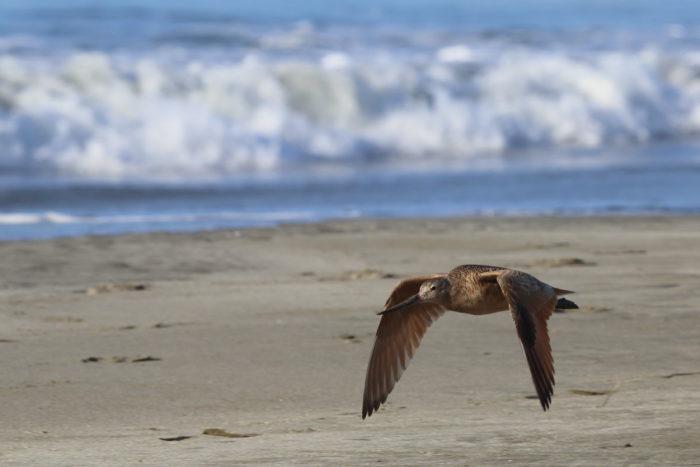 4. Bodega Bay