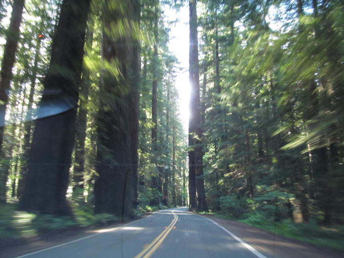 1. Redwood Highway