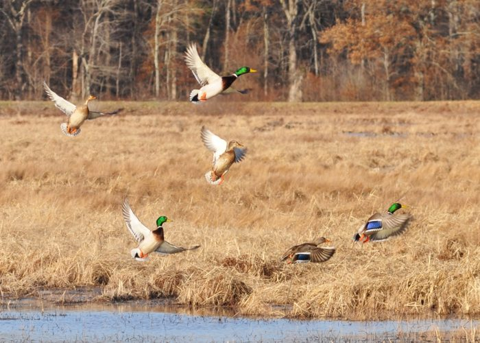 It's an important resting and wintering spot for waterfowl and migratory birds and was also created for the preservation of bottomland hardwood forest.