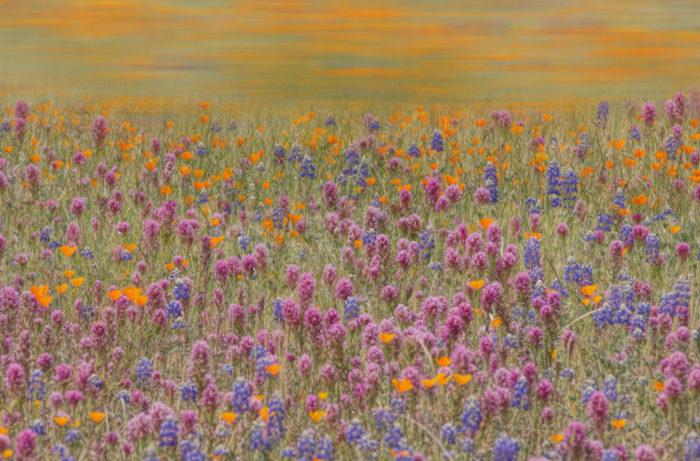 11. Wildflowers USA