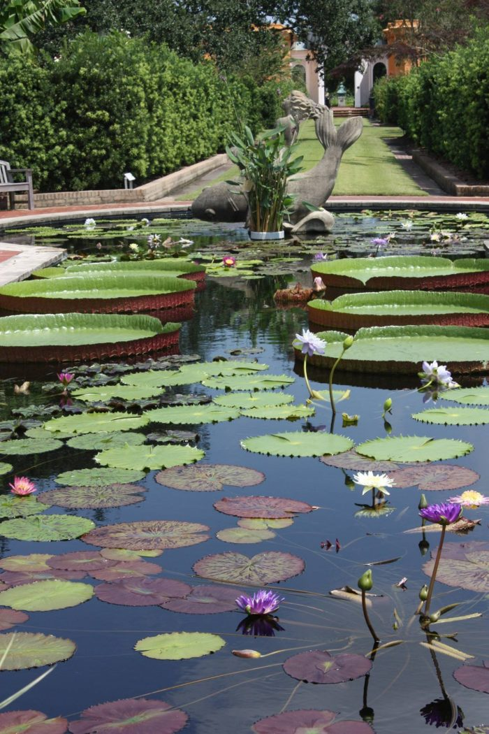 But my absolute favorite in the gardens is the lily pond!