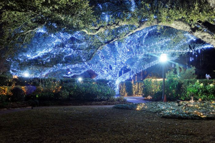 And of course, when the lights go on, the gardens simply come alive.