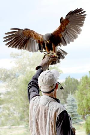 1. See a falcon show followed by a chuckwagon dinner in a wildlife park.