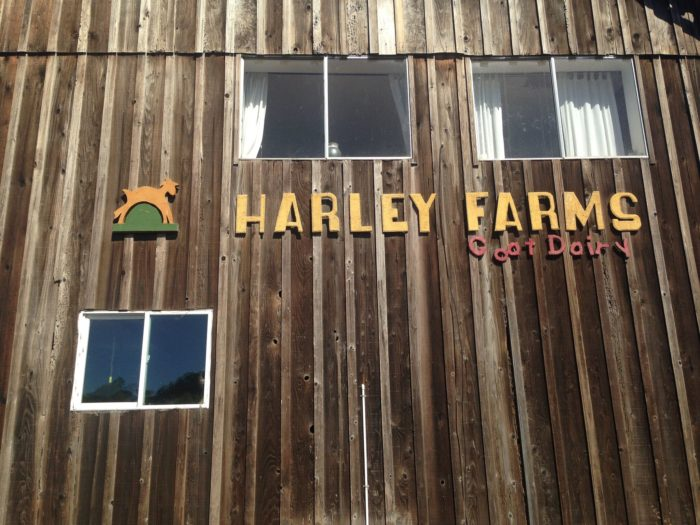 Then head inland a few miles to visit the goats and try their delicious cheese at Harley Farms.