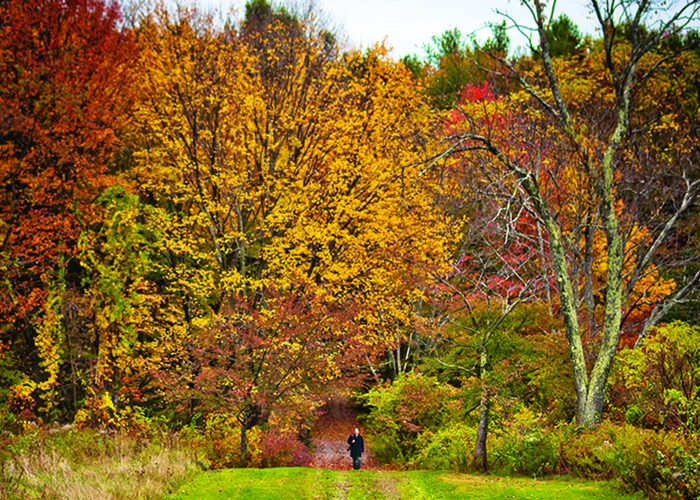 No matter the season, Tower Hill Botanic Gardens' beauty is always in bloom.