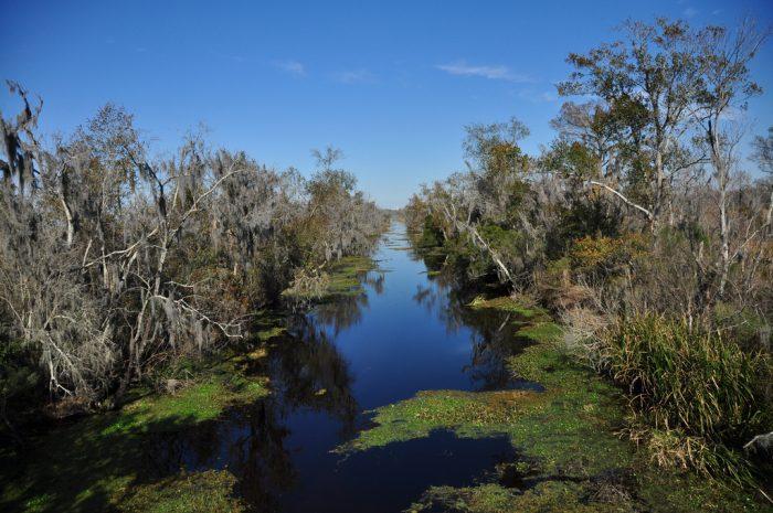 6) Palmetto Trail/Bayou Coquille Trail/Marsh Overlook Trail, Jean Lafitte Barataria Preserve