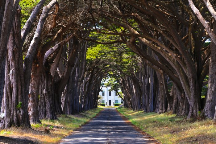 12. The Cypress Tunnel