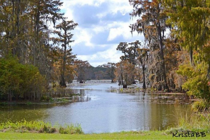 Lake Martin is home to the Cypress Island Nature Preserve, just outside of Breaux Bridge.