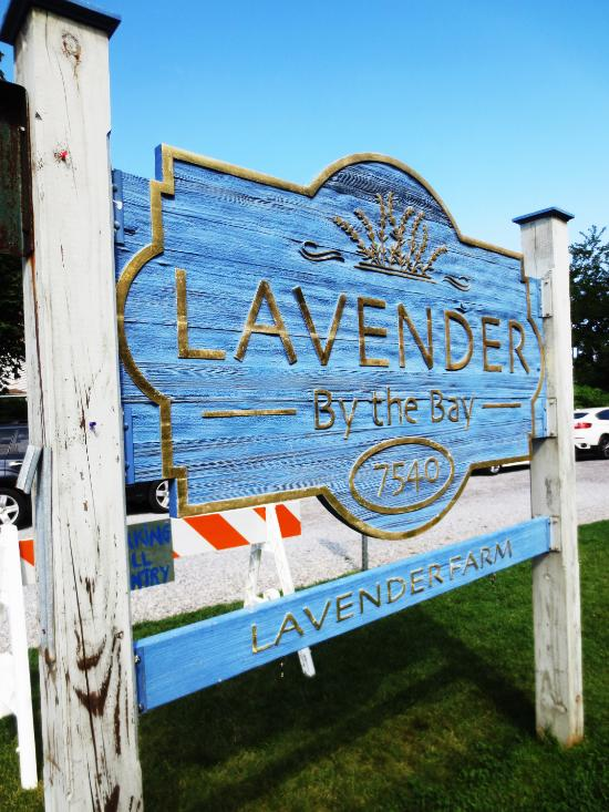 Way out on Long Island, you'll find the magical farm that is Lavender by the Bay.