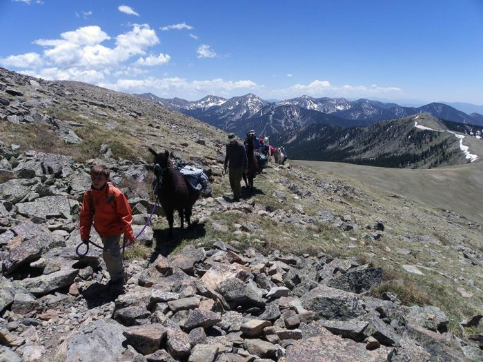 6. Go llama trekking in the Sangre de Cristo Mountains.